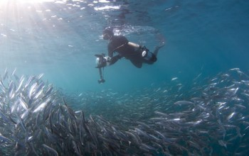 A photographer swims with sardines off Port St John's on the annual Sardine Run.