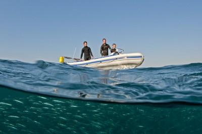 Animal Ocean and the sardines