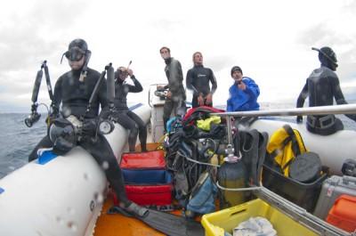 Sardine run 2010 ANIMAL OCEAN by Jean Tresfon