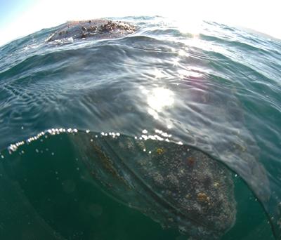 Sardine Run with Animal Ocean South Africa