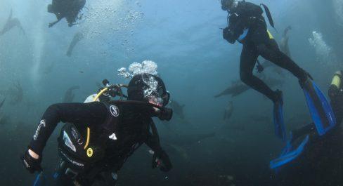 Seal Snorkeling Animal Ocean 9