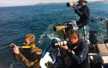 Photographers on the Sardine Run with Animal Ocean