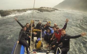 Seal Snorkelers