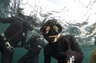 guide on how to snorkel with seals by animal ocean