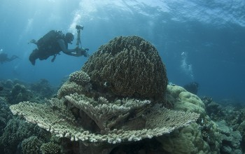 Photographers capture the coral reef scapes in the Mafia Island Marine Park.