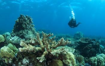 Mafia Island coral reef diving