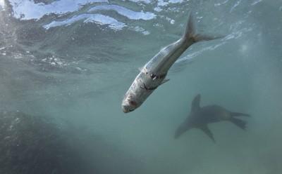 feeding-seals