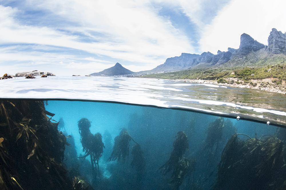 Two Oceans Aquarium, Steve Benjamin, Animal Ocean, Cape Town Kelp slip image