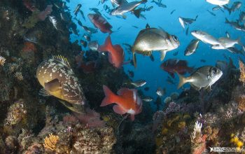 South Africa new Marine Protected Areas animal ocean steven benjamin