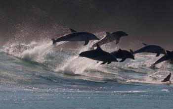 South Africa Marine protected areas animal ocean Steven Benjamin