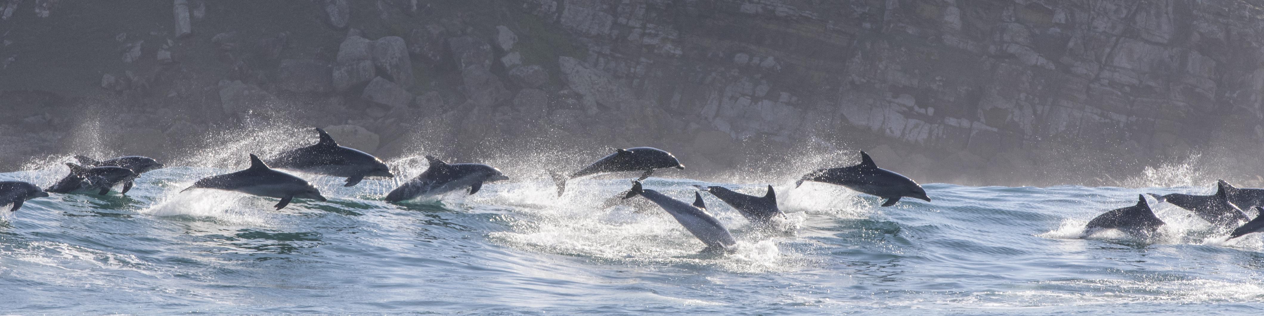 Sardine Run Animal Ocean Steve Benjamin