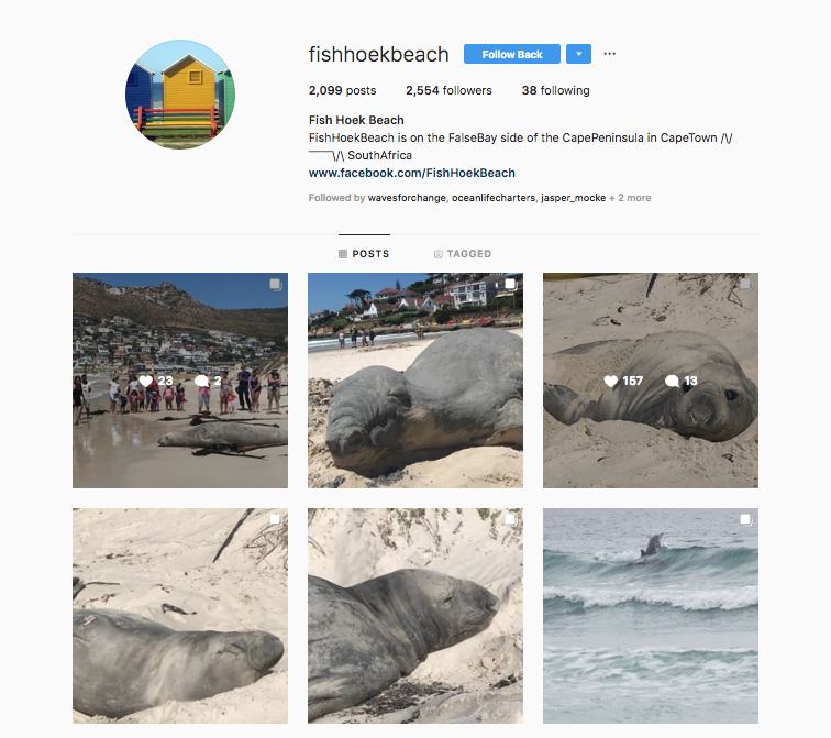 animal ocean elephant seal cape town steven benjamin