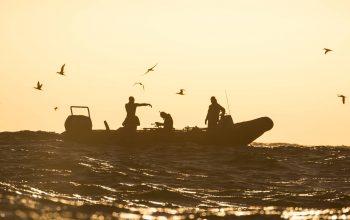 Sardine Run Animal Ocean