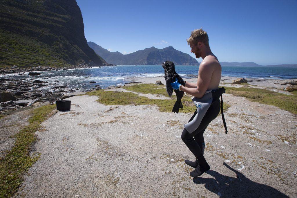 animal ocean seal snorkeling seal rescue