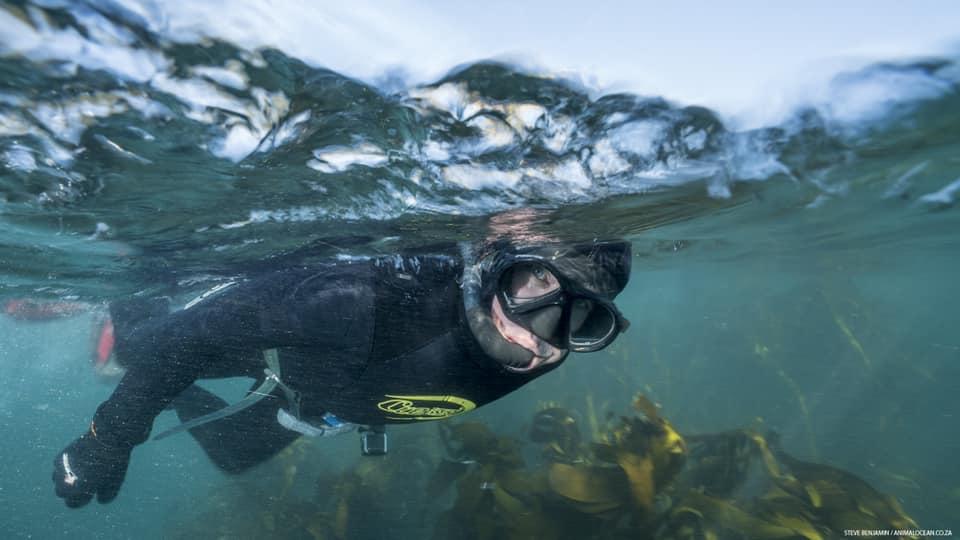 A split level shot of a snorkeler above a kelp forest bed