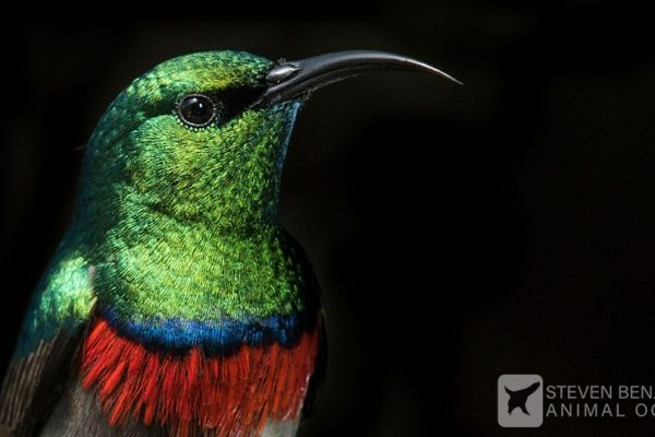 Sunbird in left of frame